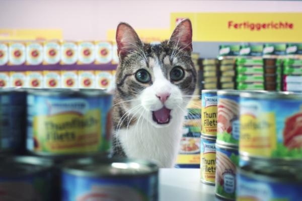 Sponsored Video: Katzen präsentieren die Markenvielfalt von Netto