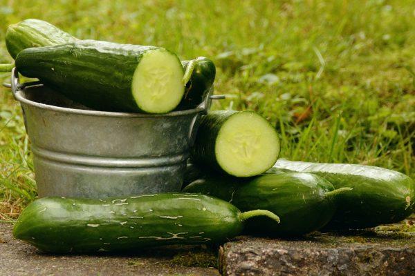 Gemüse selber anbauen: So gelingt die Gurkenpflege